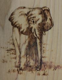 Elephant Icon- transparent